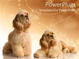 PowerPlugs: PowerPoint template with two big fluffy dogs on a cozy brown background