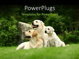 PowerPlugs: PowerPoint template with two big white dogs and puppy sitting in green grass
