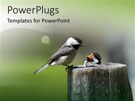 PowerPoint template displaying two birds in the wild with blurr background
