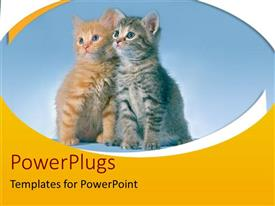 PowerPlugs: PowerPoint template with two black and brown cats together with black background