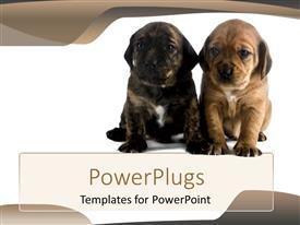 Colorful slide deck having two black and brown dogs on a white background