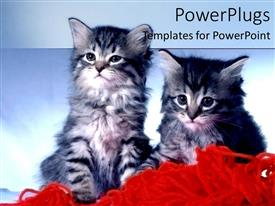 PowerPlugs: PowerPoint template with two black and white cats on loose red wool