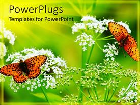 PowerPlugs: PowerPoint template with two butterflies on two flowers with greenish background