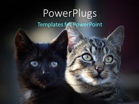 PowerPoint template displaying two cats with blurred background and place for text