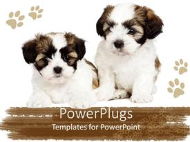 PowerPlugs: PowerPoint template with two cute puppies showing friendship between them