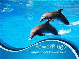 PowerPoint template displaying two dolphins jumping out of water at aquarium, dolphin show