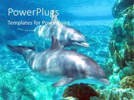 PowerPoint template displaying two dolphins swimming in ocean together mates friends blue background