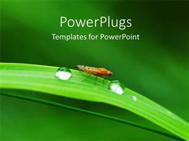 PowerPoint template displaying two drops of water and a moth on a long leaf