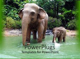 PowerPoint template displaying two elephants elephant mother and child going through water in a jungle setting with trees in the background