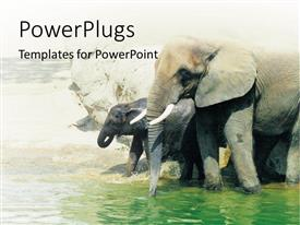 PowerPlugs: PowerPoint template with two elephants walking in the water by the shore
