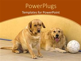 PowerPlugs: PowerPoint template with two golden retrievers sit on floor with soccer ball