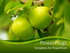 PowerPlugs: PowerPoint template with two green apples on a tree with greenish background