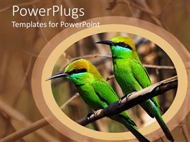 PowerPoint template displaying two green birds on a branch