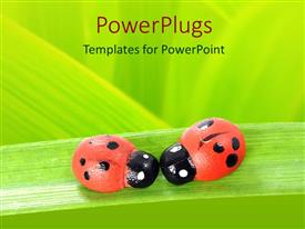 PowerPlugs: PowerPoint template with two red and black ladybugs on green leaf, green background