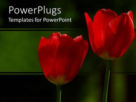 PowerPoint template displaying two red wild flowers on a green and black background