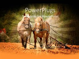 PowerPlugs: PowerPoint template with two shinning horses riding together on a sandy floor