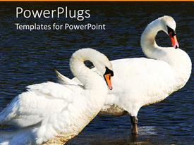 PowerPlugs: PowerPoint template with two swans standing in water with curved necks, pair of swans