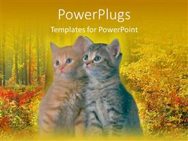 PowerPlugs: PowerPoint template with two tabby kittens leaning on each other in front of autumn background