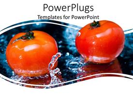 PowerPoint template displaying two tomatoes in clear water splash