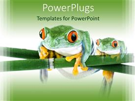 PowerPlugs: PowerPoint template with two tree frogs with orange bulging eyes on branch of plant