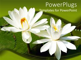 PowerPlugs: PowerPoint template with two tulip flowers present on the leave