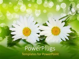 PowerPlugs: PowerPoint template with two white daisy flowers with ferns, green and white bokeh effect background