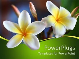 PowerPlugs: PowerPoint template with two white flowers close ups in bright green background