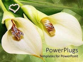 PowerPlugs: PowerPoint template with two white lilies with gold and diamond crested rings inside