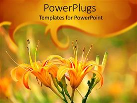 PowerPlugs: PowerPoint template with two yellow lily flowers on a natural blurry  background