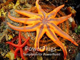 PowerPlugs: PowerPoint template with two yellow and red colored starfishes on an ocean ground