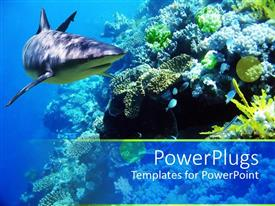 PowerPoint template displaying underwater coral reef ocean with shark and small fish