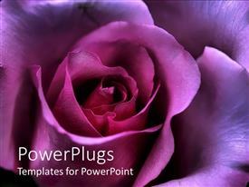 PowerPlugs: PowerPoint template with valentine's Day rose symbolizing love and affection