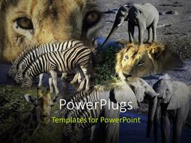 PowerPoint template displaying various animals in a jungle with grayish background