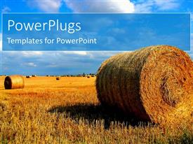 PowerPlugs: PowerPoint template with vast cut brown harvested grass rolled up into ball