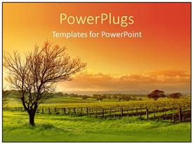 PowerPlugs: PowerPoint template with vineyard landscape showing sunset and clody sky