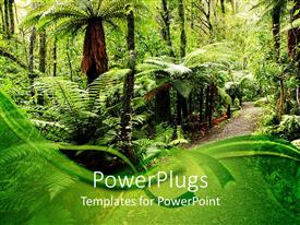 PowerPoint template displaying walking path through natural tropical forest with palm trees