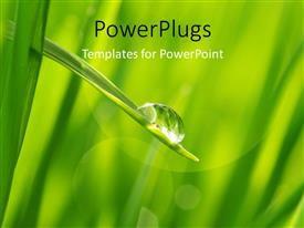 PowerPlugs: PowerPoint template with the water drop along with grass and greenery in background