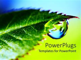 PowerPlugs: PowerPoint template with water droplet from apex of fresh green leaf