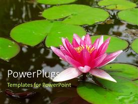 Beautiful PPT theme with a water lily in the lake with a lot of leaves