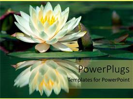 PowerPlugs: PowerPoint template with water lily reflection on pond lake flower calm mediation zen yoga