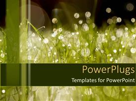 PowerPlugs: PowerPoint template with wet grass dew morning summer watering drought environment water