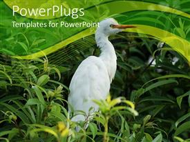 PowerPlugs: PowerPoint template with white bird in middle of green vegetation in green background