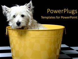PowerPlugs: PowerPoint template with white and black checker background with white Terrier in yellow bucket
