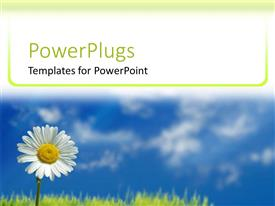 PowerPlugs: PowerPoint template with white daisy close up, blue sky