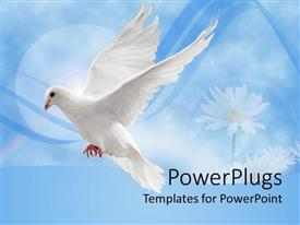PowerPlugs: PowerPoint template with white dove in flight against a blue background with daisies