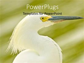 PowerPoint template displaying white egret on abstract background with grunge green shade