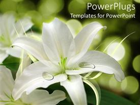 PowerPlugs: PowerPoint template with white flower arrangement, weddings, floral design, florist