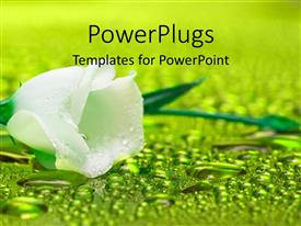 PowerPlugs: PowerPoint template with white flower with water droplets