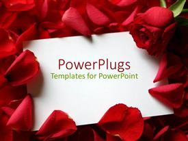PowerPoint template displaying white greeting card on red beautiful roses