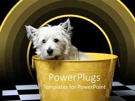 PowerPlugs: PowerPoint template with white highland terrier westie dog in yellow bucket, black and white checker floor, yellow arches